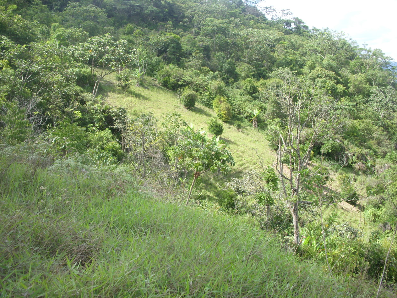 Ancient coca plantation at CocaWasi.